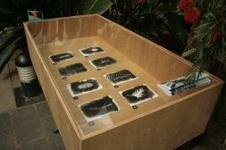 Imogen Frost, Plant Museum, Photograms, vitrine and limited edition publication. Photo by Imogen Frost